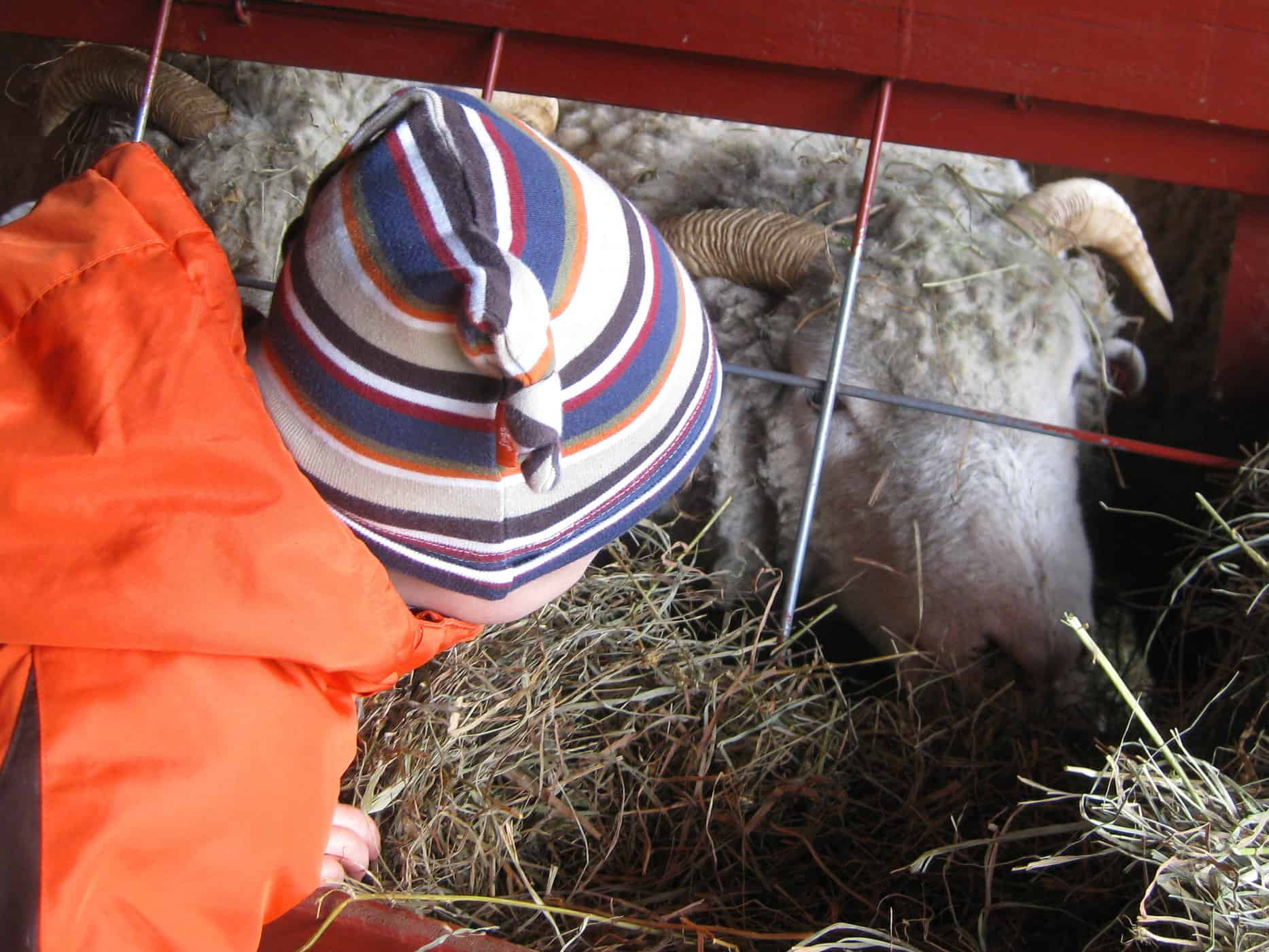 Sheep Shearing and Sweatpants Instead of Blogging