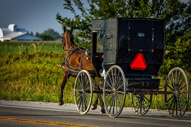 The Amish in a horse buggy