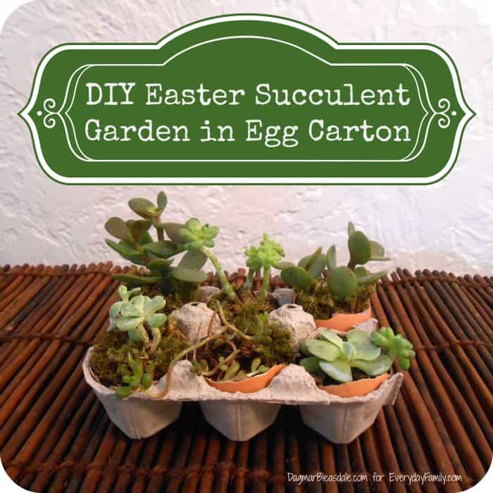 DIY Succulent Garden in Egg Carton