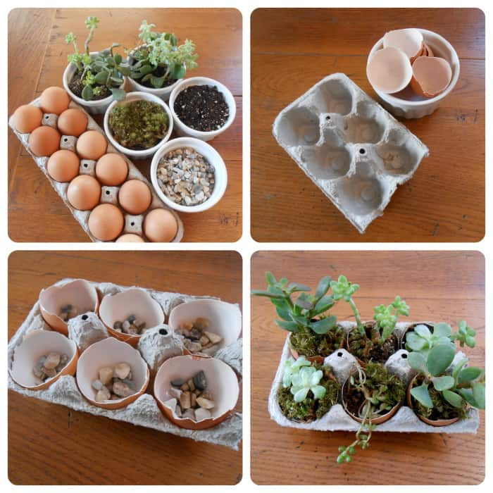 DIY Succulent Garden in an Upcycled Egg Carton