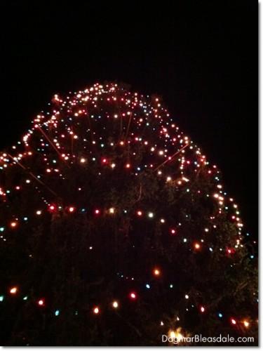 Katonah Christmas tree, biggest in New York State