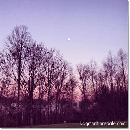 trees and the moon during sunset