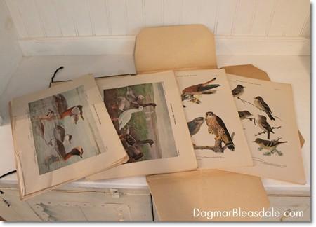 vintage Birds of New York prints, 1915