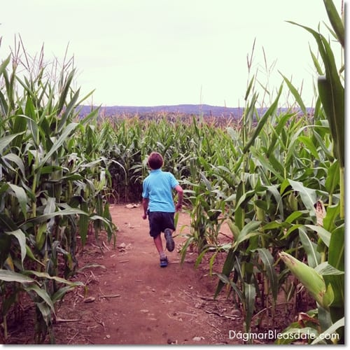 boy running through corn maze