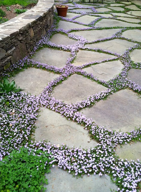 garden pathway with flowers in the cracks