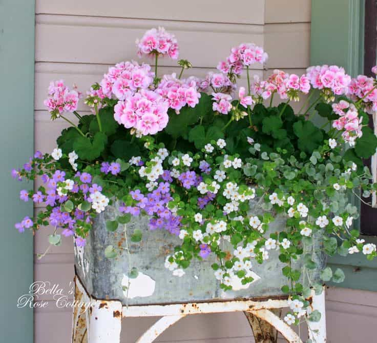 Cottage Garden Ideas from Pinterest