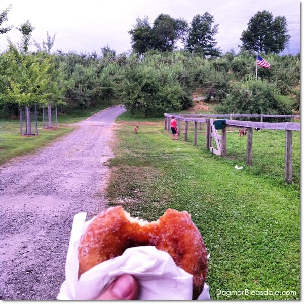 Sugar Donuts and a Tractor