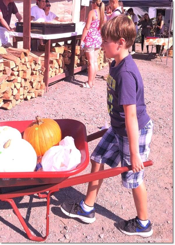 child pushing cart