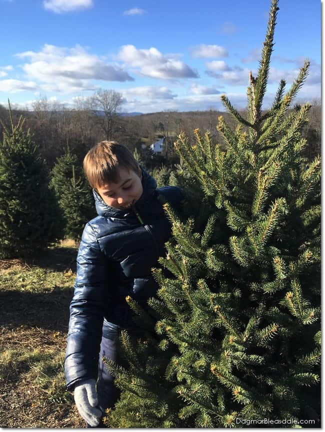 Get a Real Christmas Tree And Create Fun Family Memories, DagmarBleasdale.com