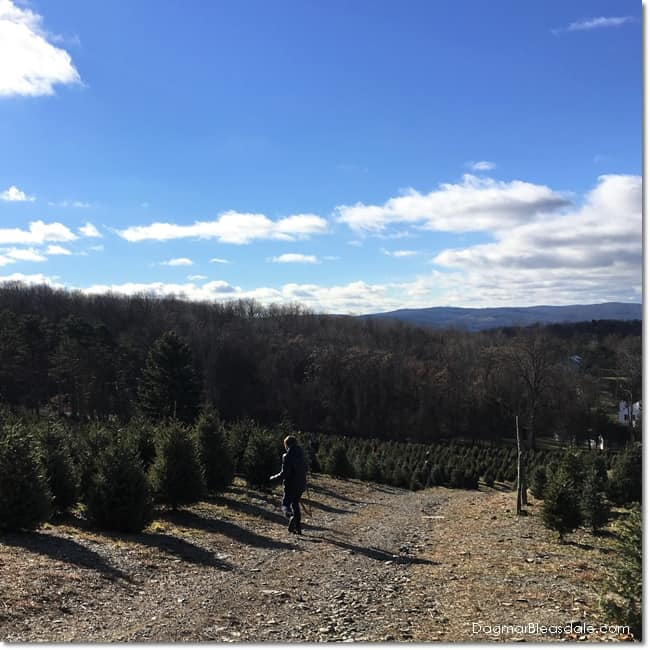 real Christmas tree, Christmas Tree Promotion Board
